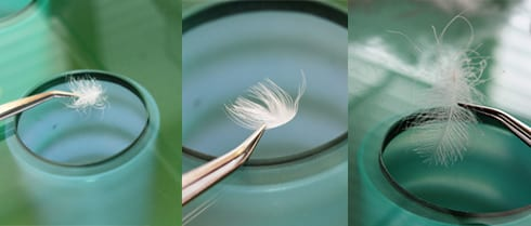 Inspect down and feathers in laboratory