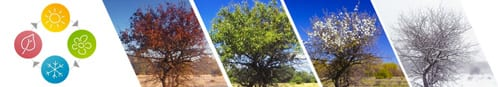 The same tree pictured in summer, spring, autumn and winter